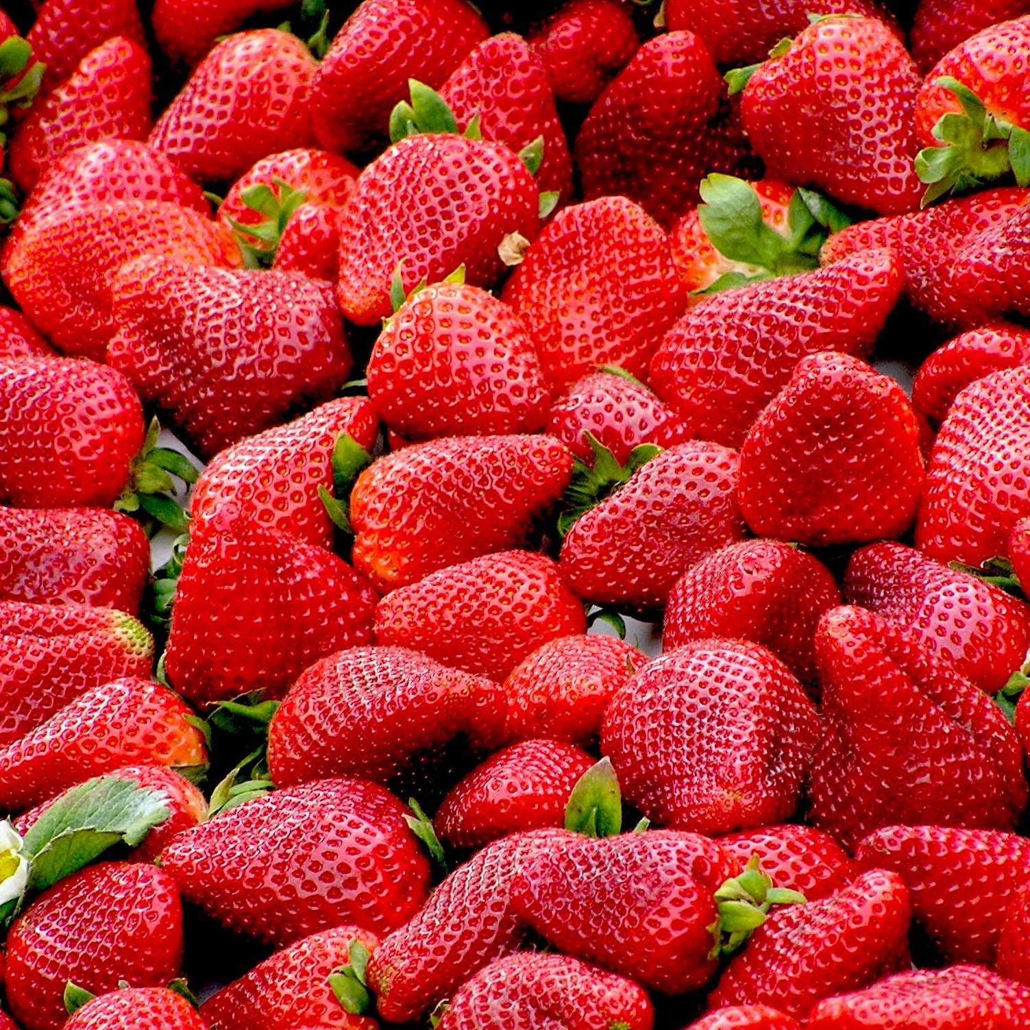 red-strawberries-fruit-royalty-free-70746